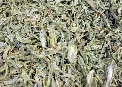 キダチアロエ乾燥葉